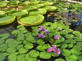Waterplanten kopen