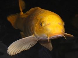 Vissen kopen